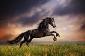 racing-horse-360x239
